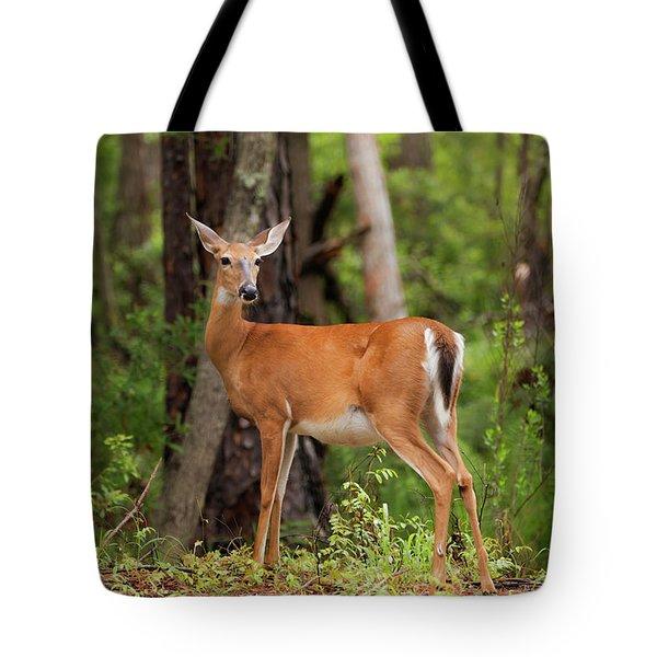 Doe, A Deer, A Female Deer Tote Bag