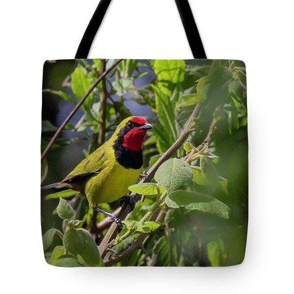 Doherty's Bushshrike Tote Bag