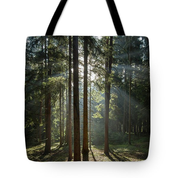 Early Morning In Coniferous Forest Tote Bag