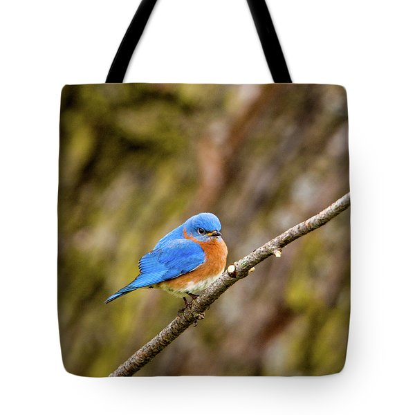 Tote Bag featuring the photograph Eastern Bluebird by Jeff Phillippi