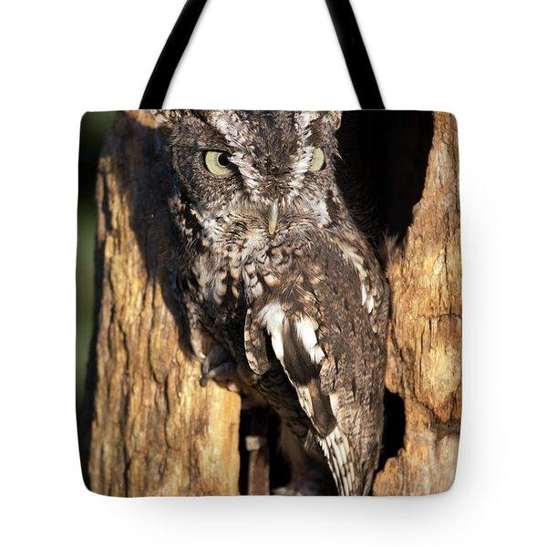 Eastern Screech Owl 92515 Tote Bag