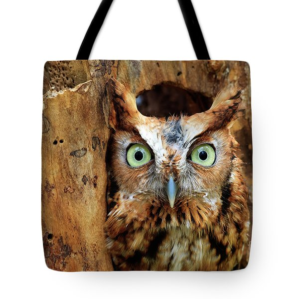 Eastern Screech Owl Perched In A Hole In A Tree Tote Bag