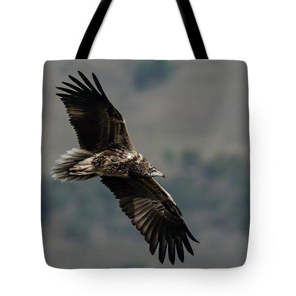 Egyptian Vulture, Sub-adult Tote Bag