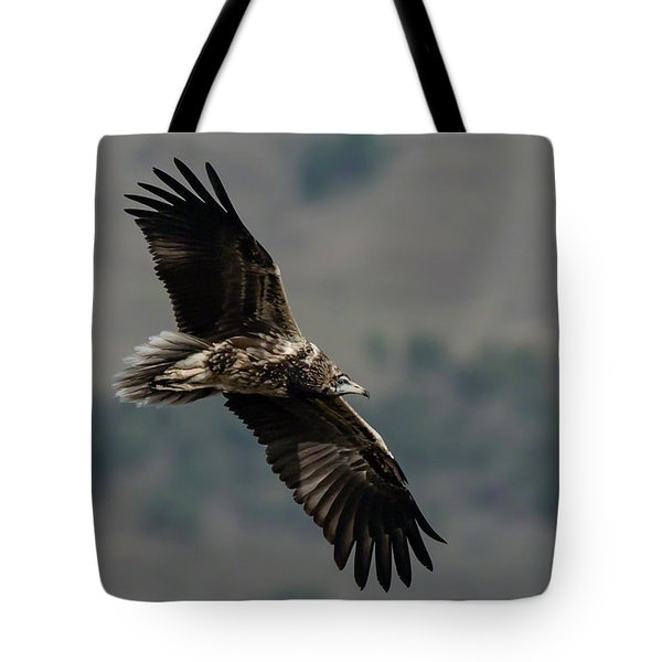 Tote Bag featuring the photograph Egyptian Vulture, Sub-adult by Thomas Kallmeyer