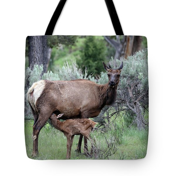 Elk Cow And Calf In Yellowstone Tote Bag
