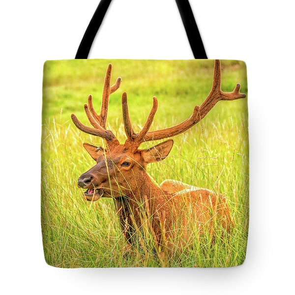 Tote Bag featuring the photograph Elk by Dheeraj Mutha