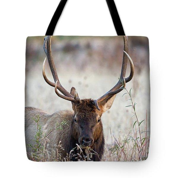 Elk Portrait Tote Bag