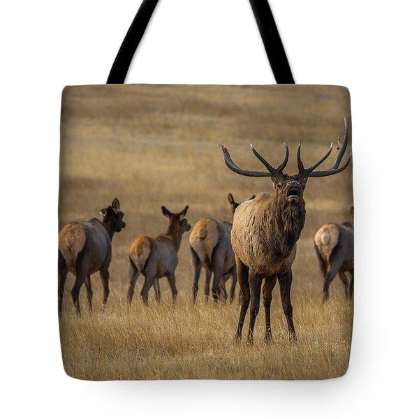 Elk Rut In Full Swing Tote Bag