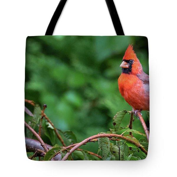Envy - Northern Cardinal Regal Tote Bag