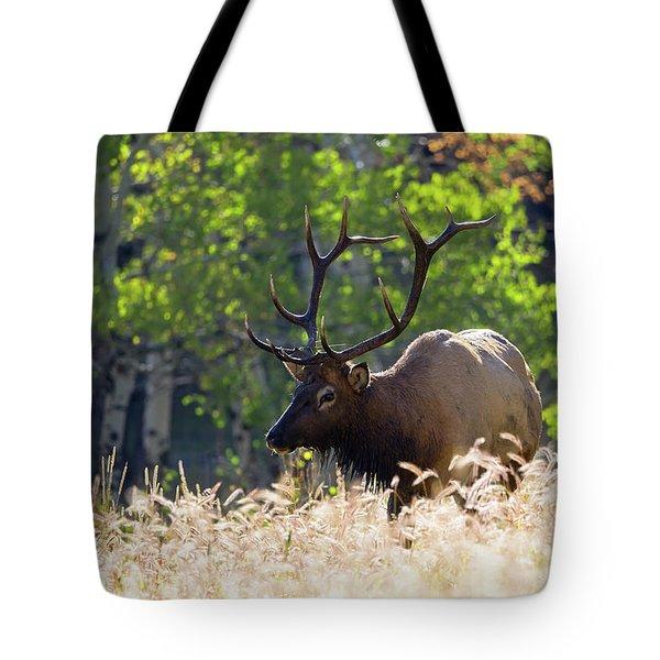 Fall Color Rocky Mountain Bull Elk Tote Bag