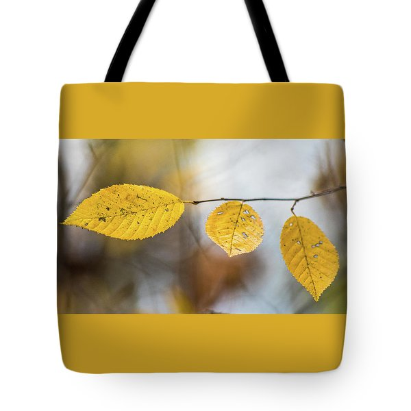 Tote Bag featuring the photograph Fall In Triplicate by Michael Arend