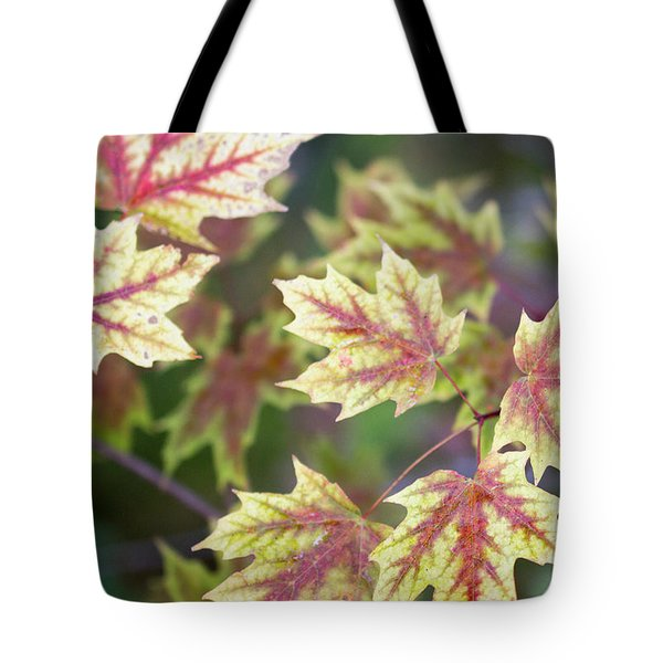 Fall Red And Yellow Leaves 10081501 Tote Bag