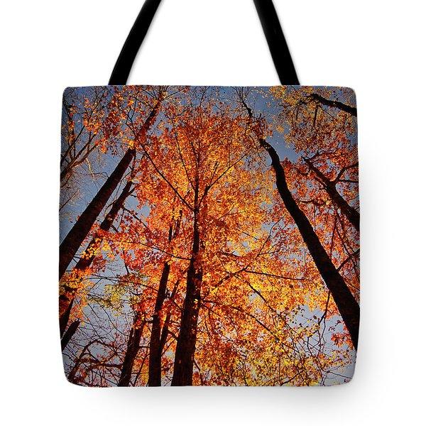 Fall Trees Sky Tote Bag