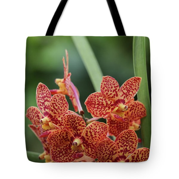Family Of Orange Spotted Orchids Tote Bag
