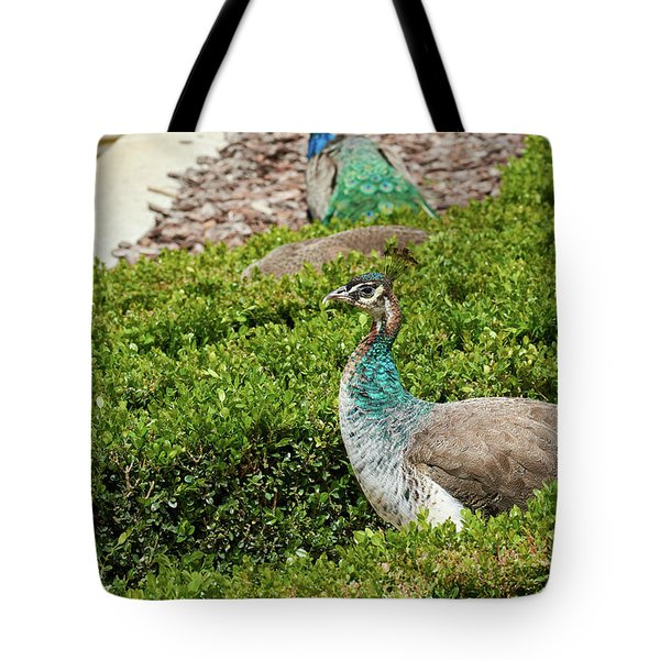 Female Peafowl At The Gardens Of Cecilio Rodriguez In Madrid, Spain Tote Bag