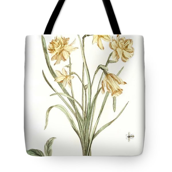 Five Daffodils By Johan Teyler  1648-1709  Tote Bag