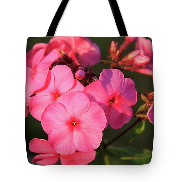 Flaming Pink Phlox Tote Bag