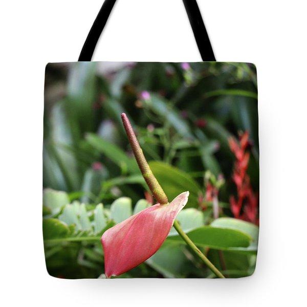 Flamingo Flower - Anthurium Andreanum Tote Bag