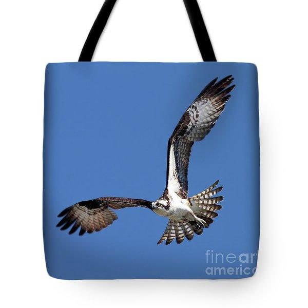 Focused Osprey Tote Bag