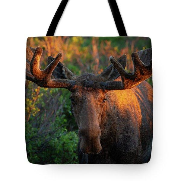 Forest King Sunrise Tote Bag