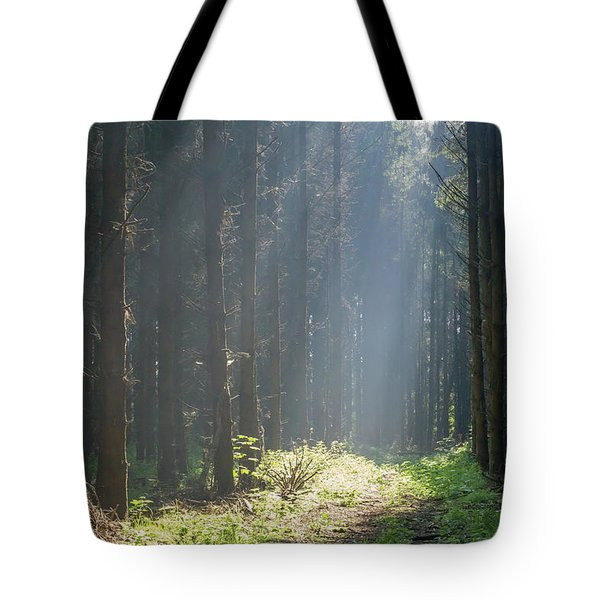 Tote Bag featuring the photograph Forrest And Sun by Anjo Ten Kate