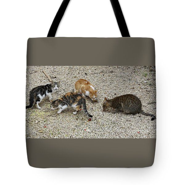 Tote Bag featuring the photograph Four Foraging Felines by PJ Boylan