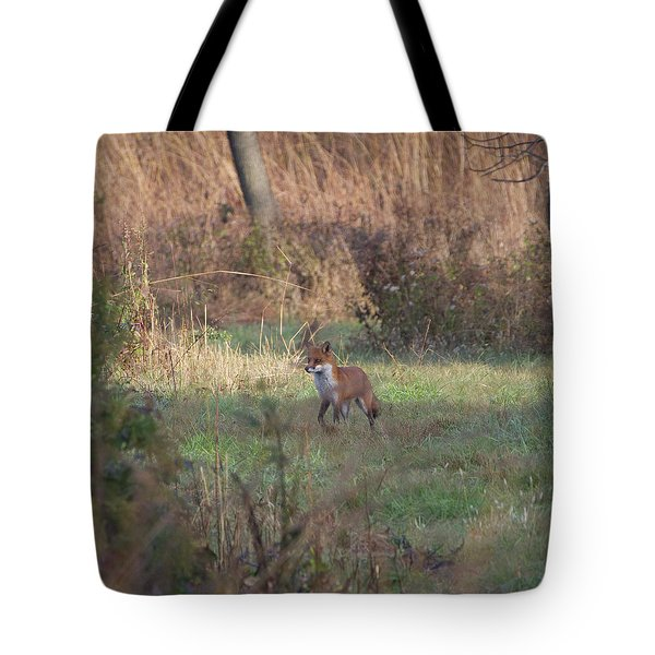 Fox On Prowl Tote Bag