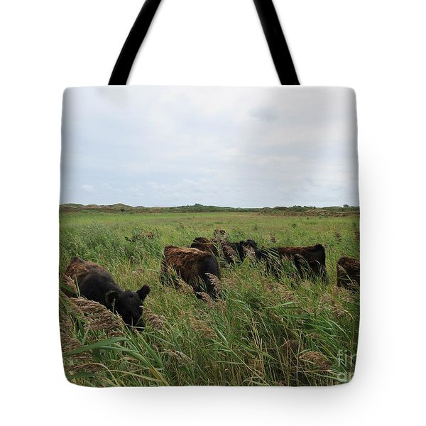 Galloway Cows On Texel North Holland Tote Bag
