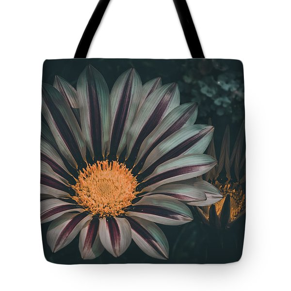 Gazania Gaze Tote Bag