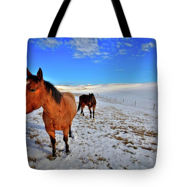 Tote Bag featuring the photograph Geldings In The Snow by David Patterson