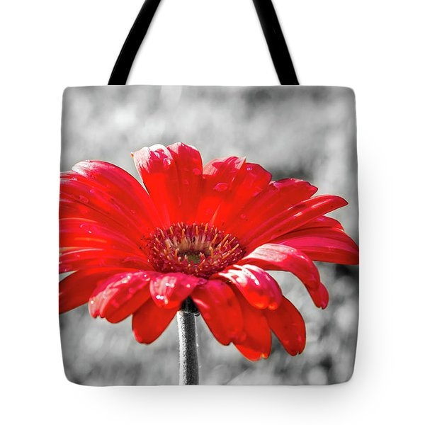 Gerbera Daisy Color Splash Tote Bag