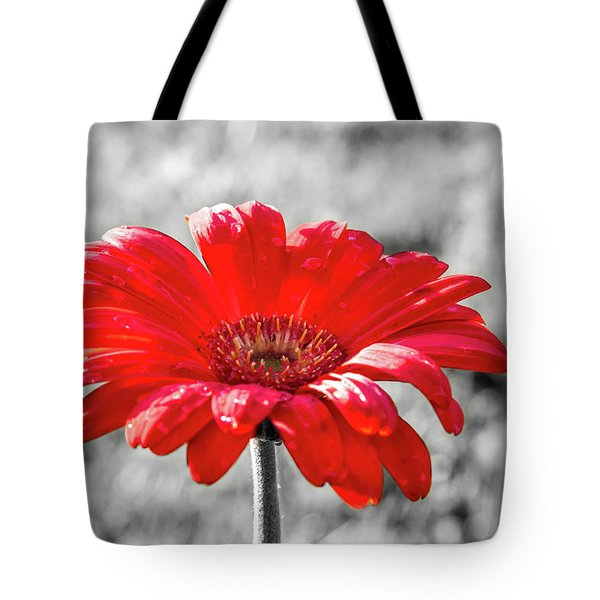 Gerbera Daisy Color Splash Tote Bag