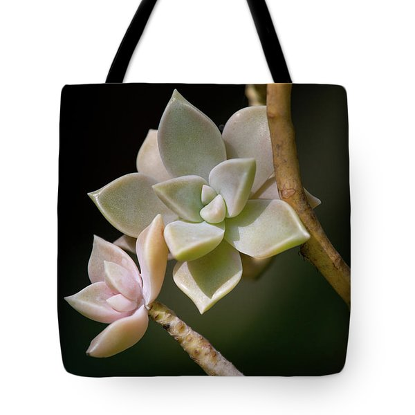 Tote Bag featuring the photograph Ghost Plant by Dale Kincaid