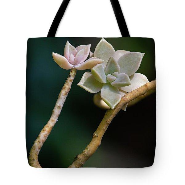 Tote Bag featuring the photograph Ghost Plant Succulent by Dale Kincaid