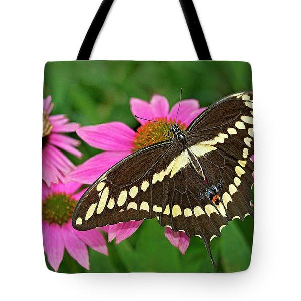 Giant Swallowtail Papilo Cresphontes Tote Bag