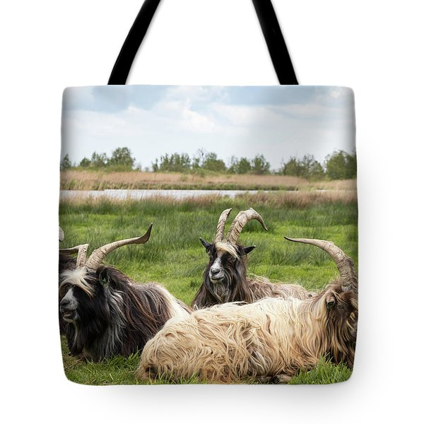 Tote Bag featuring the photograph Goats  by Anjo Ten Kate