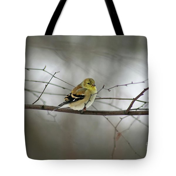 Goldfinch In Winter Looking At You Tote Bag