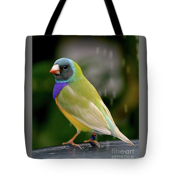 Tote Bag featuring the photograph Gouldian Finch? #2 by PJ Boylan