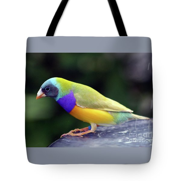 Tote Bag featuring the photograph Gouldian Finch?  by PJ Boylan