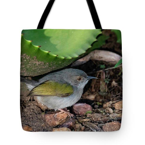Gray-backed Camaroptera Tote Bag