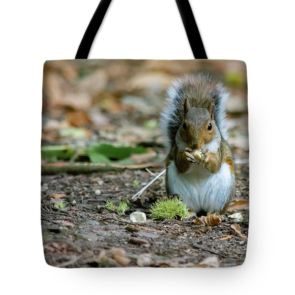 Tote Bag featuring the photograph Gray Squirrel Stood Upright Eating A Nut by Scott Lyons