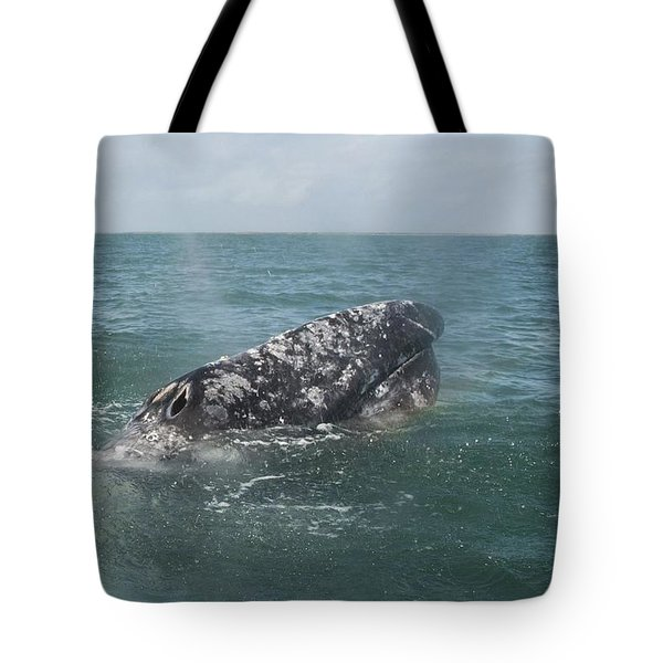 Gray Whale In Bahia Magdalena Tote Bag