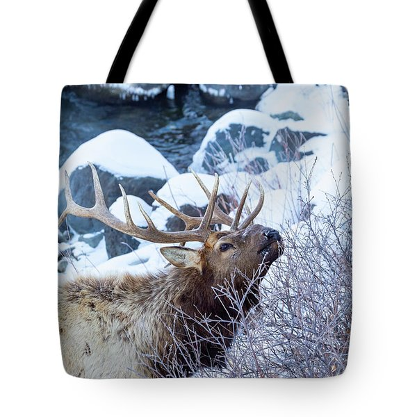 Grazing Elk Tote Bag