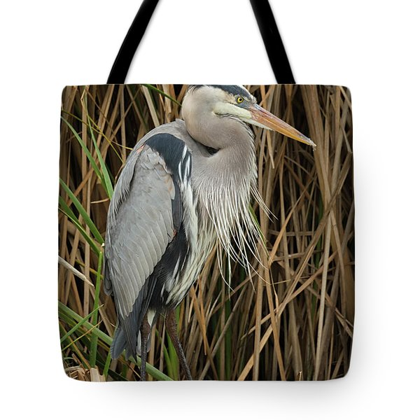 Great Blue Heron On Padre Island Tote Bag