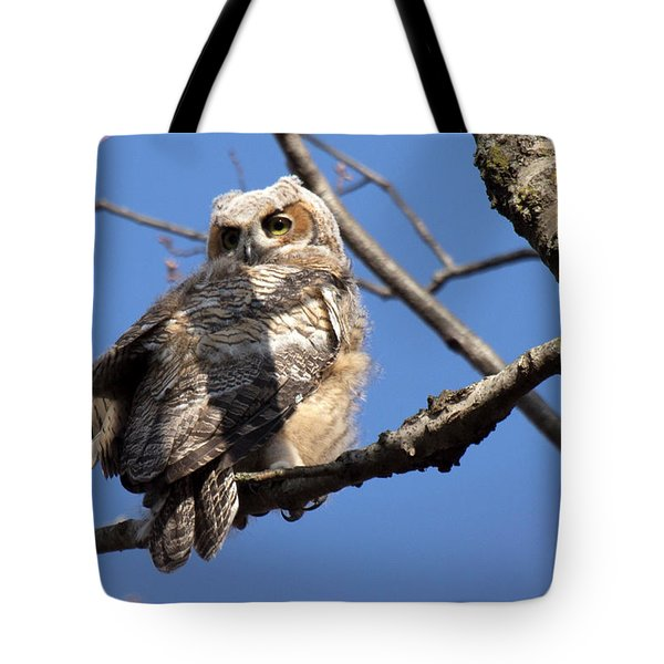 Great Horned Owlet 42915 Tote Bag