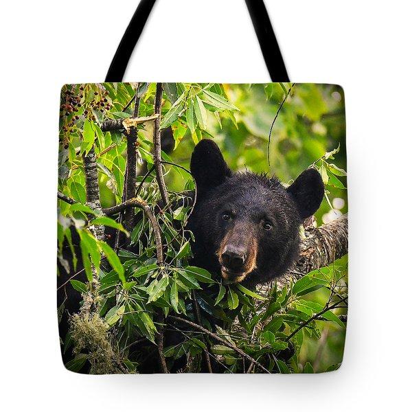 Great Smoky Mountains Bear - Black Bear Tote Bag
