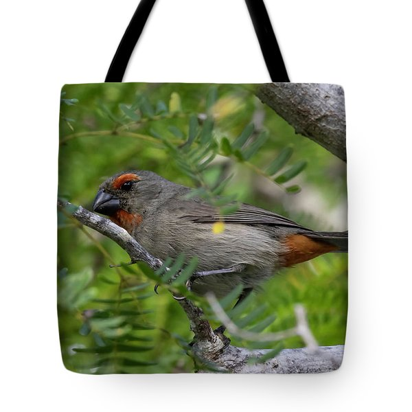 Tote Bag featuring the photograph Greater Antillean Bullfinch by Thomas Kallmeyer