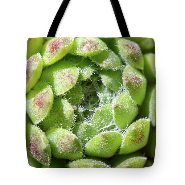 Green Sempervivum Top Down Close Up Tote Bag