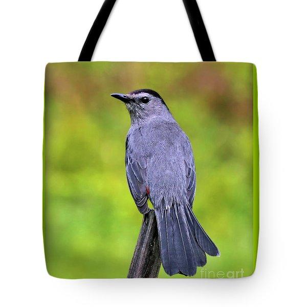 Grey Catbird Tote Bag
