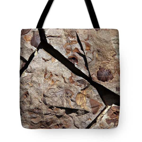 Group Of Late Crustacean Fossils Tote Bag